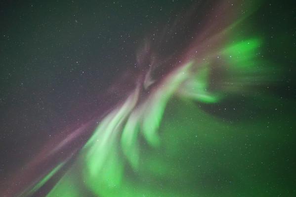 Polarlichtblume